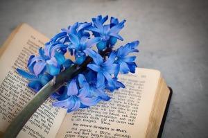 flower-1371059_640